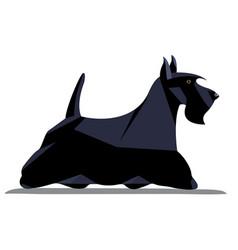 scotch terrier minimalist image vector image