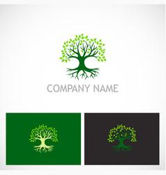 tree nature botany logo vector image