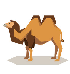 flat geometrical bactrian camel vector image