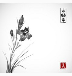 black iris flowers hand drawn with ink in asian vector image