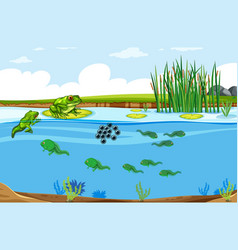 green frog life cycle scene vector image