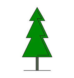 green spruce on white background vector image
