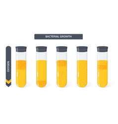 Growth bacteria colony vial from oxygen vector