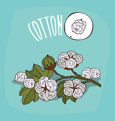 Set of isolated plant cotton flowers herb vector