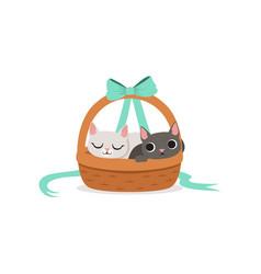two kittens sitting in wicker basket vector image