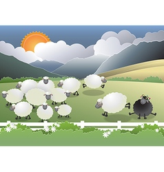 Black sheep in field vector
