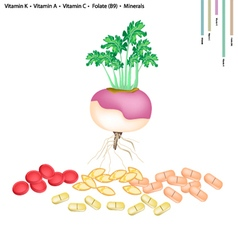 Turnip with Vitamin K A C and B9 vector