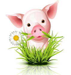 Little pig grass vector image