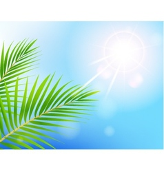 beauty Sunny blue sky and palm tree vector image