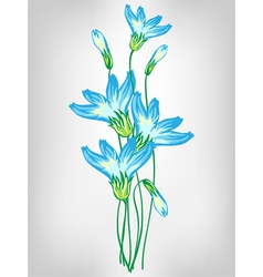 cornflowers vector image