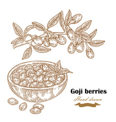 goji berries on a branch hand drawn medical plant vector image
