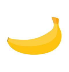 banana fruit vector image