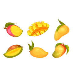 Ripe and juicy mango fruit with sweet flesh vector