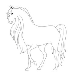 coloring book horse vector image