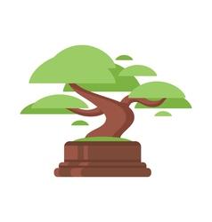 flat style of bonsai tree vector image