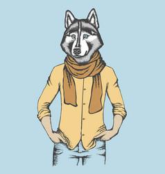 Husky in human shirt vector
