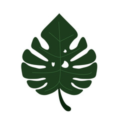 Monstera tropicalplant icon vector