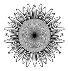 sun flower out line vector image vector image