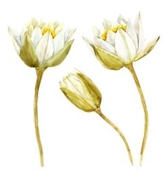 Watercolor lotus flower vector image