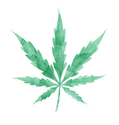 watercolor marijuana leaf isolated on white vector image