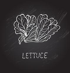 Hand drawn lettuce vector