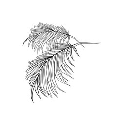 Palm leaves hand drawn ink vector