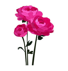 Peonies icon on a white background peony vector