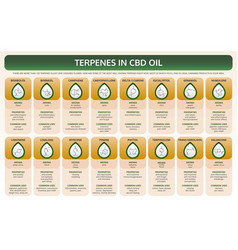 Terpenes in cbd oil horizontal textbook vector