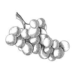 Engraving fresh fruit concept vector