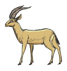 antelope african animal vector image