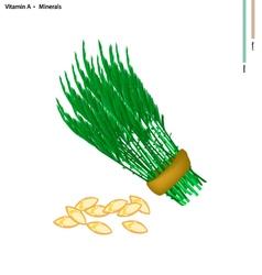 Acacia pennata with vitamin a and minerals vector