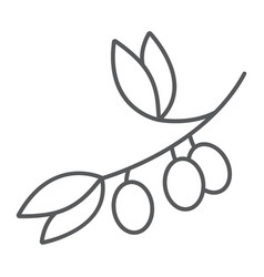 olive branch thin line icon plant and tree vector image