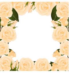 Orange rose border vector