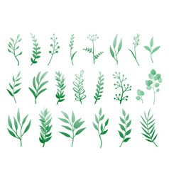 set herbs and branches vector image