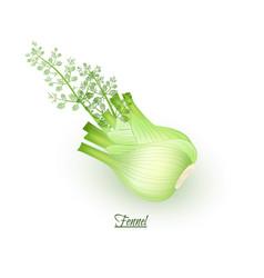 Sprigs fresh delicious fennel in realistic vector