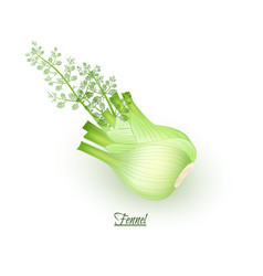 Sprigs of fresh delicious fennel in realistic vector