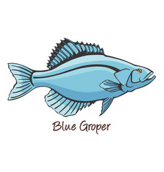 grouper color vector image