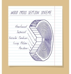 Wood cross section scheme sketch vector image