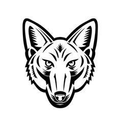 Head american jackal front view retro woodcut vector