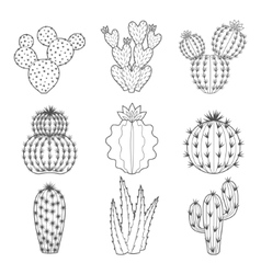Icon set of contour cactus and succulent vector