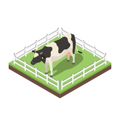 Isometric 3d of cow vector image