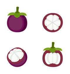 Mangosteen whole fruit and halves vector