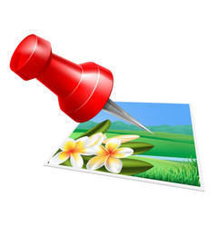 pinning photo icon vector image