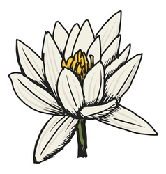 white lotus vector image