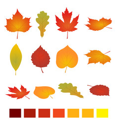 isolated autumn leaves flat vector image vector image