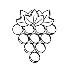 silhouette grapes fruit icon image vector image vector image