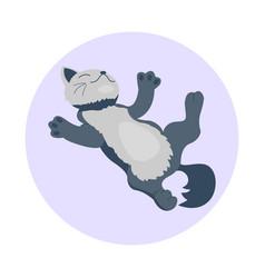 cat breed cute kitten gray pet portrait fluffy vector image vector image