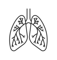 Human lungs with bronchi and bronchioles linear vector