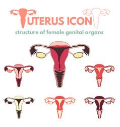 uterus icon vector image
