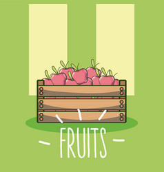 apples fruits cartoon vector image